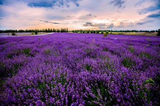 <荷兰风景唯美高清桌面壁纸