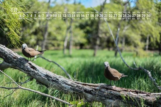2020年6月毛里求斯美景日历壁纸
