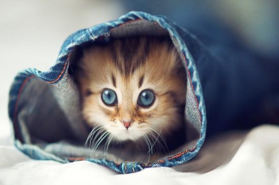 呆萌可爱的小猫咪桌面壁纸
