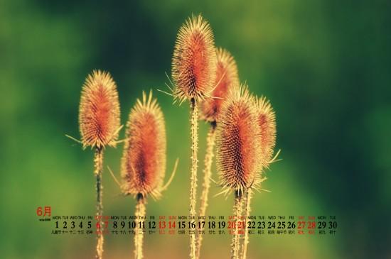 2020年6月游动的鱼儿绿色风景桌面日历壁纸