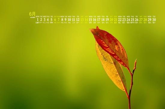 2020年6月简约清新绿植