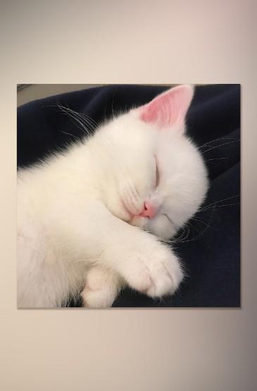 萌系可爱猫咪摄影高清手机壁纸