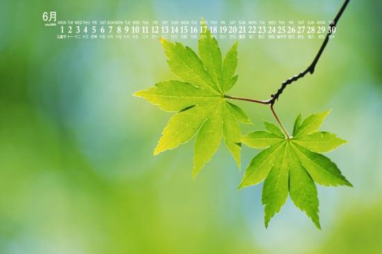 2020年6月小清新绿色植物日历壁纸