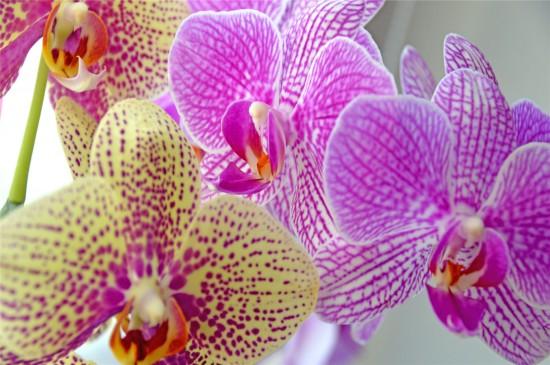 蝴蝶兰花唯美高清桌面壁纸