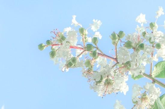 <小清新花卉与天空桌面壁纸