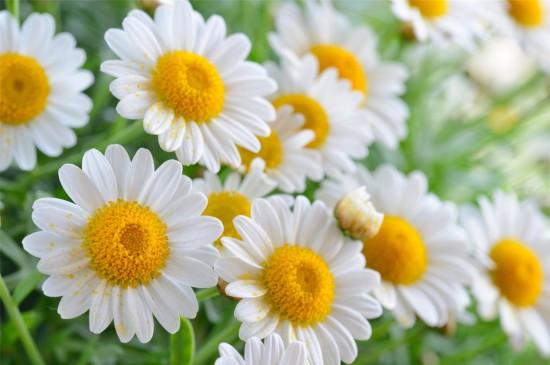 微距花卉摄影图片桌面壁纸