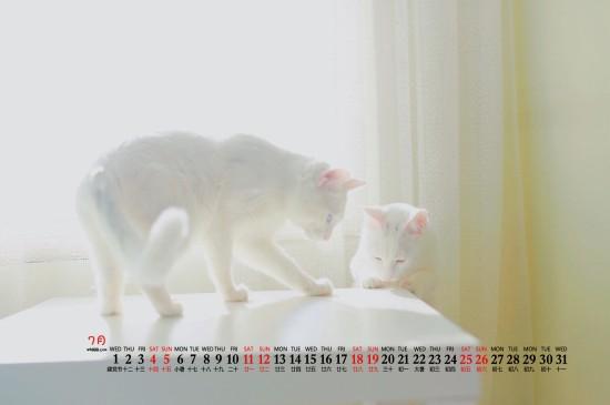 2020年7月猫咪宠物桌面日历壁纸