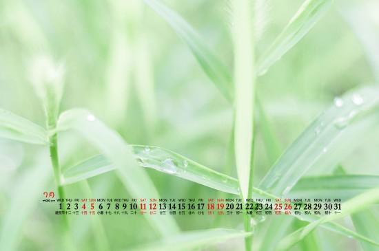 2020年7月护眼绿叶高清桌面日历壁纸