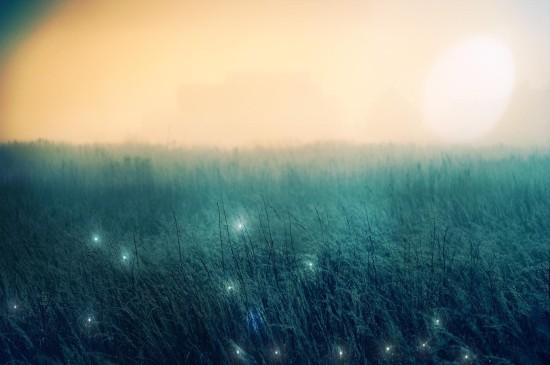 薄雾仙境森林唯美高清桌面壁纸