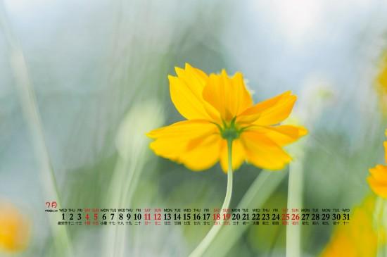 2020年7月小清新植物花卉桌面日历壁纸