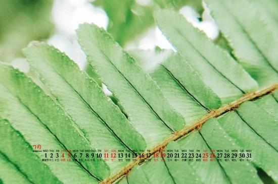 2020年7月自然风景高清护眼桌面日历壁纸