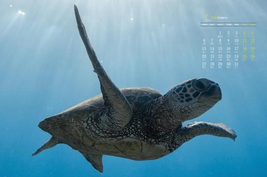 <2020年7月漂亮的海洋生物高清日历壁纸