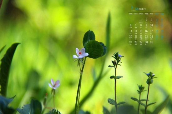 <2020年7月小清新绿色植物日历壁纸