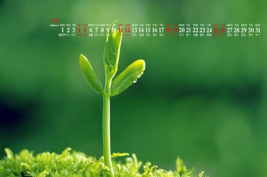 <2020年7月绿色植物护眼高清日历壁纸