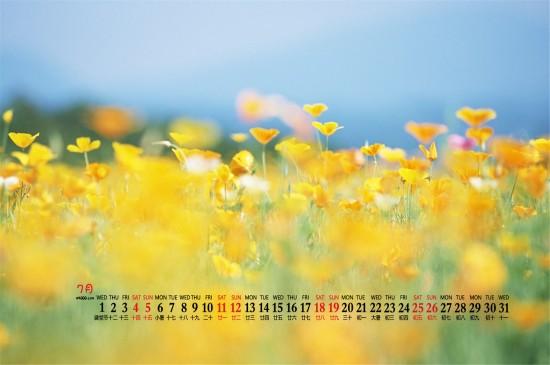 <2020年7月黄色花卉唯美桌面日历壁纸