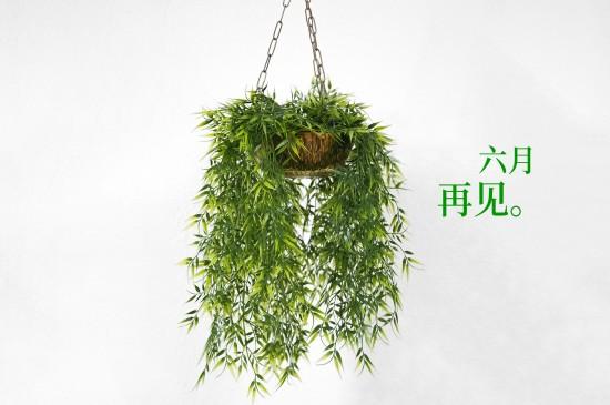 小清新绿植文字图片桌面壁纸