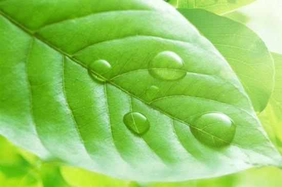 翠绿色护眼植物花卉安卓平板壁纸