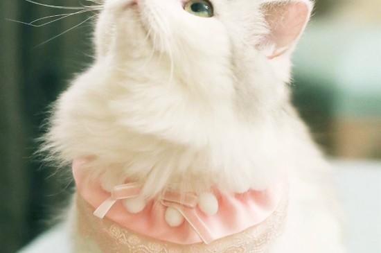 <萌萌可爱的小猫咪iPad平板壁纸