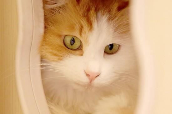 可愛動物萌寵喵咪平板壁紙下載