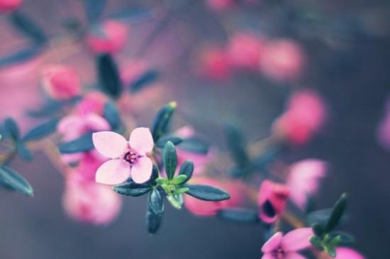 唯美植物摄影图片苹果平板壁纸图片
