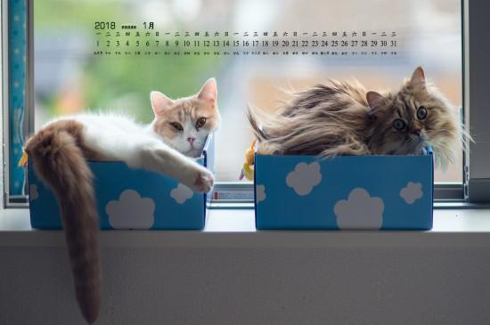 2018年1月可爱宠物猫咪图片高清日历壁纸