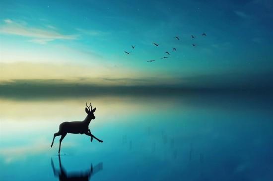 唯美自然風光小鹿iPad平板壁紙