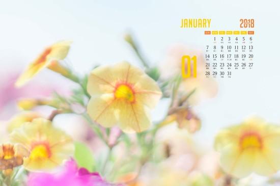 2018年1月日历治愈系花卉桌面壁纸