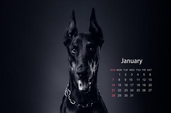 2018年1月狗狗日历桌面壁纸