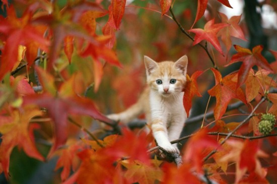 可爱动物小猫咪ipad壁纸图片