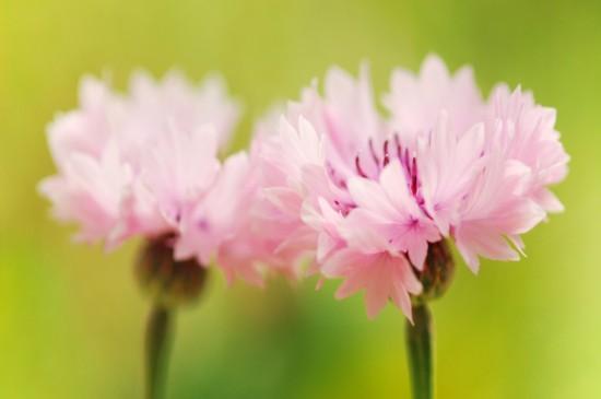 <清新花卉植物微距摄影电脑壁纸下载