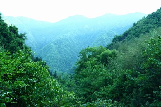 <迷雾森林唯美风景宽屏壁纸图片