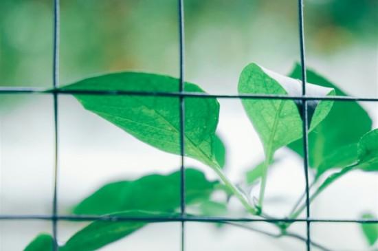 夏季小清新綠色植物平板桌面壁紙