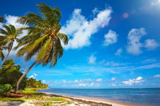 唯美沙灘椰樹風景ipad壁紙下載