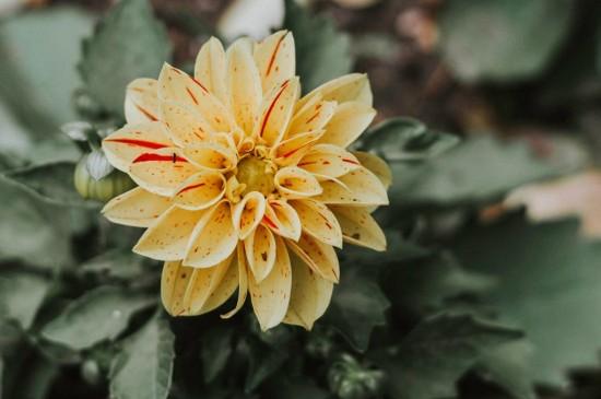 唯美花卉植物ipad平板壁紙