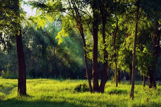 森林一抹阳光唯美风景桌面壁纸图片