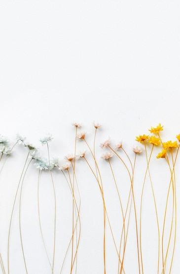 小清新花卉简约手机壁纸