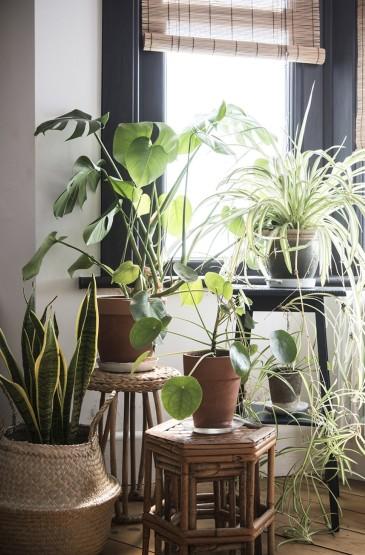 <家居室内植物养眼手机壁纸