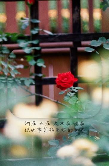 <创意唯美花朵文字短句手机壁纸