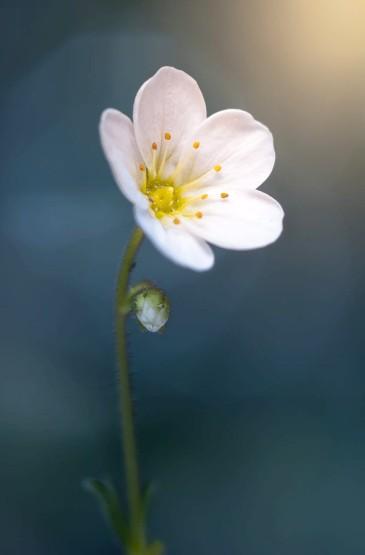 <唯美花朵植物摄影手机壁纸