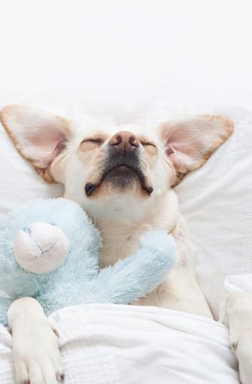 可爱白色狗狗高清iphone竖屏壁纸下载