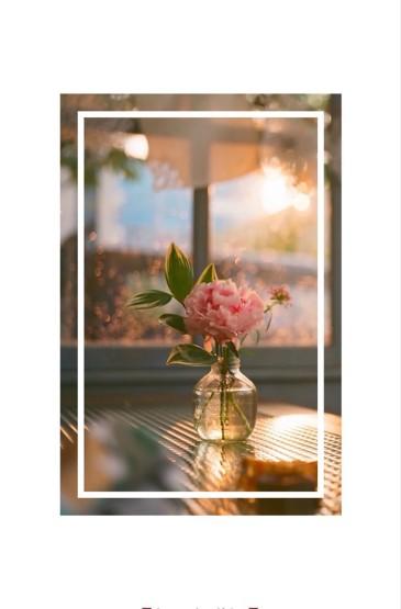 <小清新花朵植物手机壁纸大全