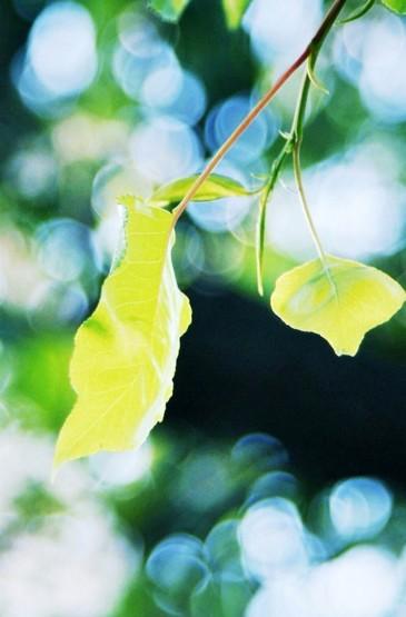 <绿色护眼植物iphone7 plus壁纸