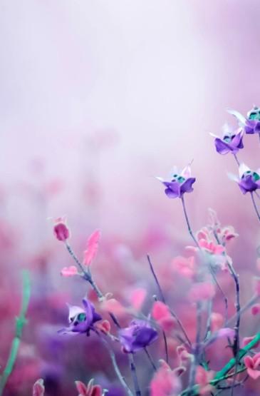 <花卉唯美摄影安卓壁纸