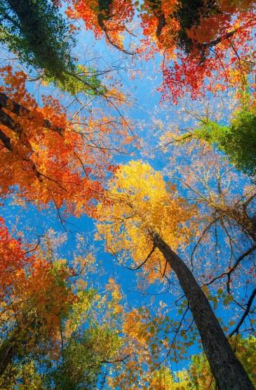 秋天唯美枫叶图片安卓壁纸