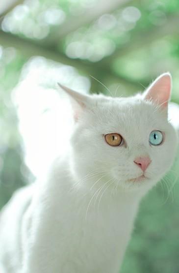 <小清新白色喵星人摄影安卓壁纸