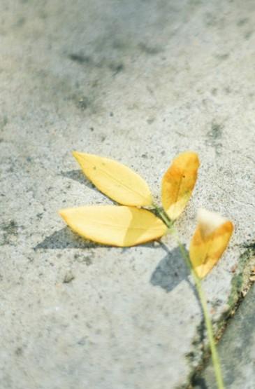 <唯美自然风光图片手机壁纸图片