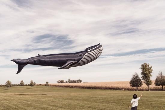 创意鲸鱼飞船图片