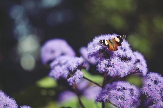 唯美紫色花卉植物圖片