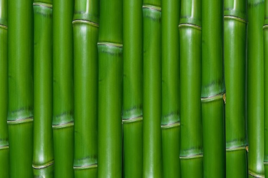 綠色護眼竹子平鋪圖片