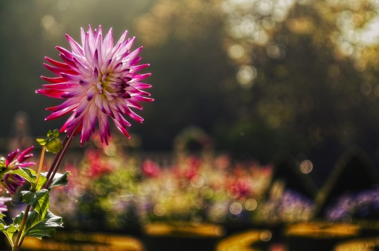 鮮艷亮麗盛開花朵圖片